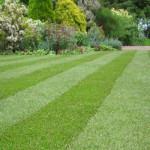 manutenzione giardini milano