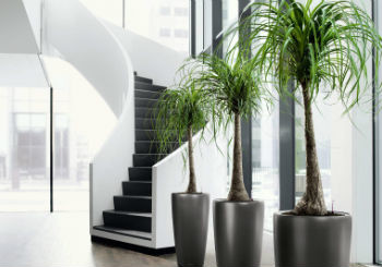 Piante da ufficio progettazione e manutenzione giardini a - Piante da ufficio resistenti ...