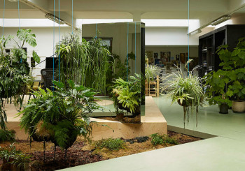 Master gardener autore a progettazione e manutenzione - Piante da ufficio resistenti ...
