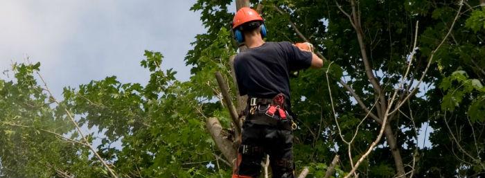 Potatura e abbattimento alberi a Milano e provincia.