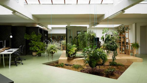 Vendita piante da ufficio e per interni a Milano e provincia.