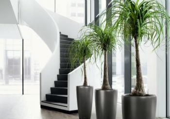 Piante Da Interno Ufficio.Piante Da Ufficio Progettazione E Manutenzione Giardini A Milano
