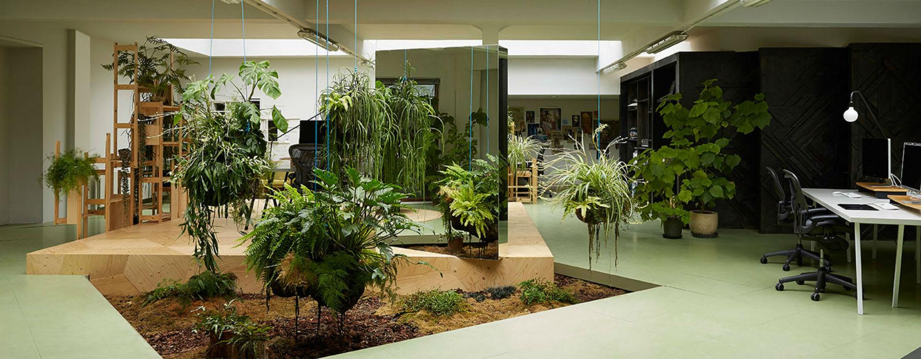 Piante da ufficio progettazione e manutenzione giardini for Piante e giardini